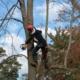 LAVORI SU FUNE AREE VERDI TREE CLIMBING